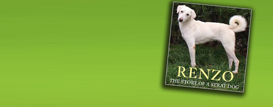 Renzo The Story Of A Stray Dog